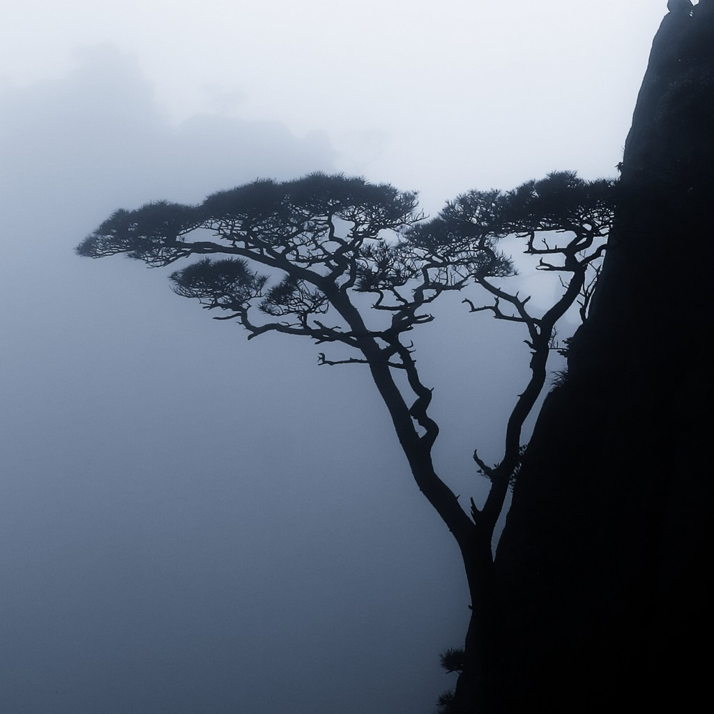 Tree perched on the side of a mountain - Rob Gregory Author