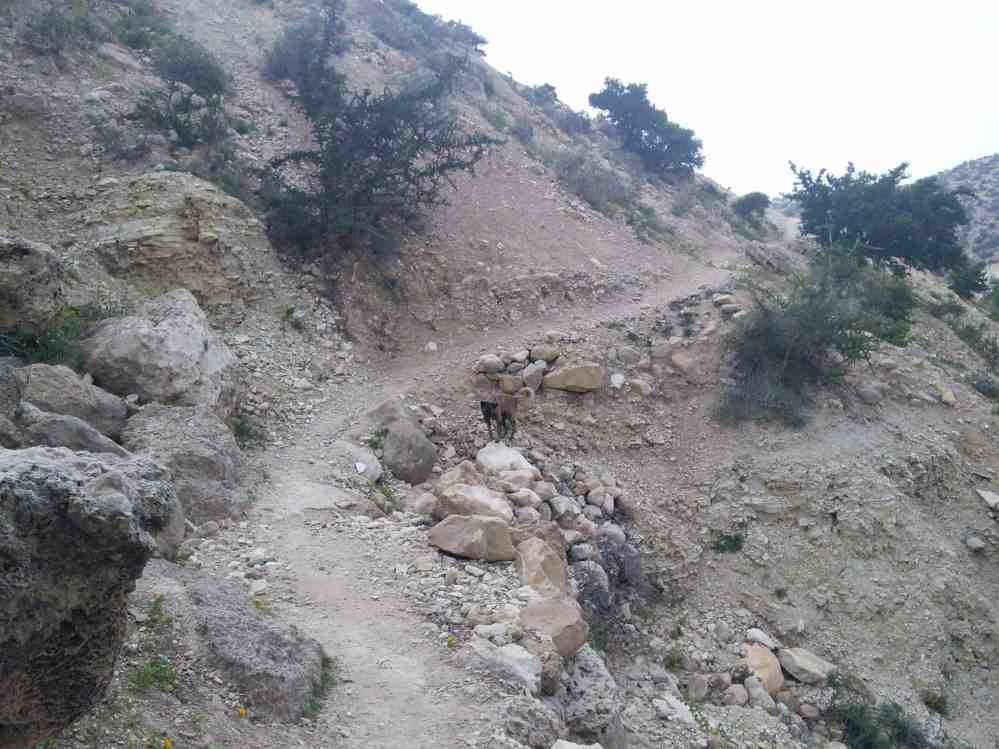 Image of a remote trail, without anyone on it... other than a dog