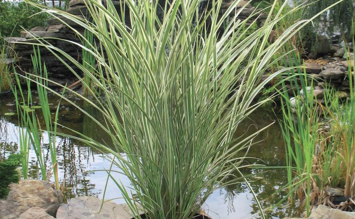 full hd ornamental grasses of and desktop medford nursery grass