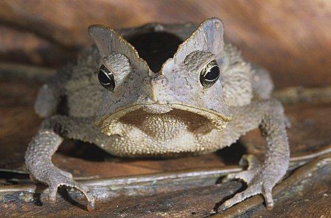 Tree frog on leaf close-up