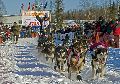 A musher departs the starting gate in Willow, Alaska at the 2010 Iditarod Trail Sled Dog Race.