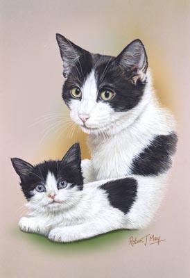 black white shorthair cat