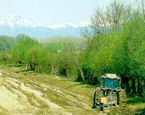 fasi attivit agricola