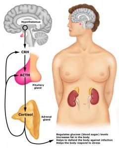 Resultado de imagem para fadiga adrenal