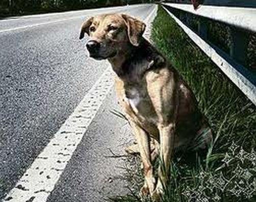 L'abbandono degli animali domestici: negazione o diniego?