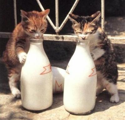 Il latte versato sull'asfalto