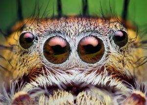 macro-nature-jumping-spider