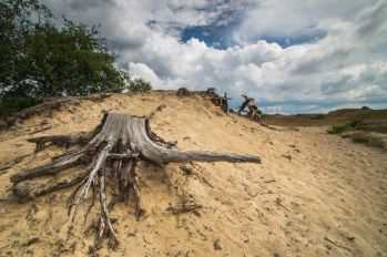 Boom karkas Hulshorster Zand