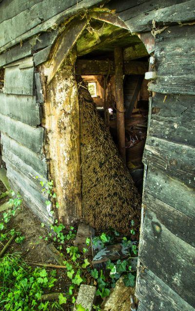 Vervallen boerderij Putten_01