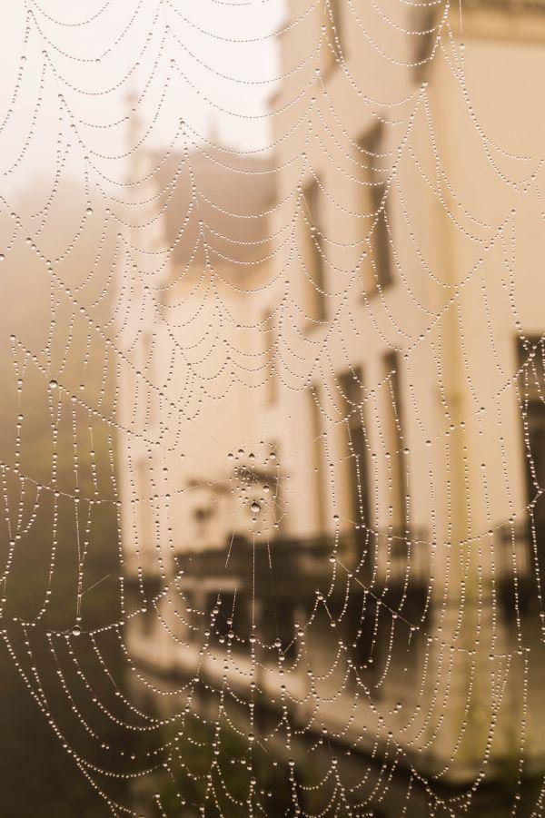Gezien door spinnenweb