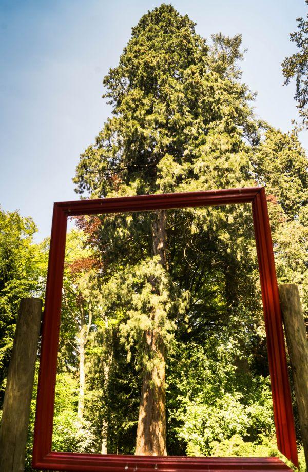 Ingelijste boom, landgoed Schovenhorst