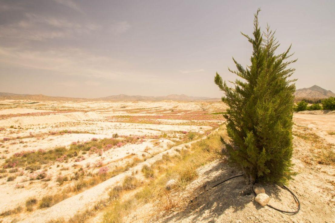 Aanplant in woestijn regio Murcia