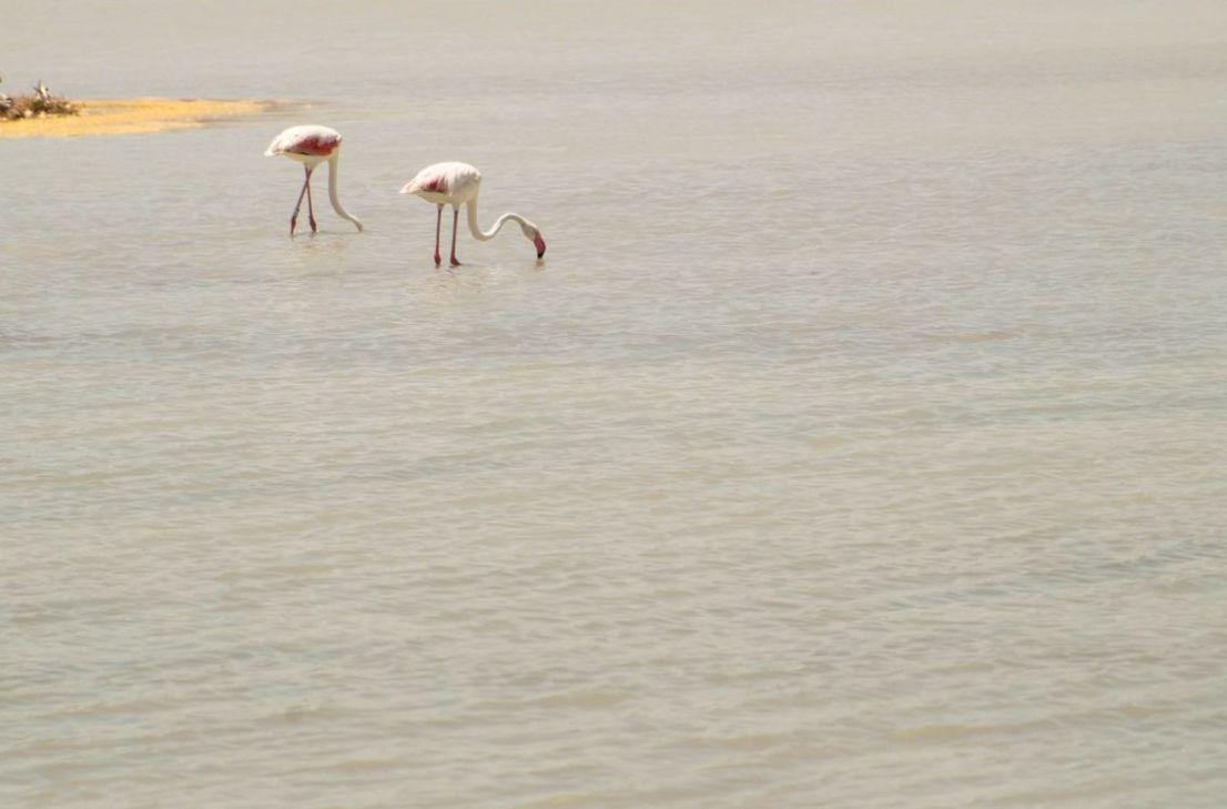 Flamingo's in El Pinet