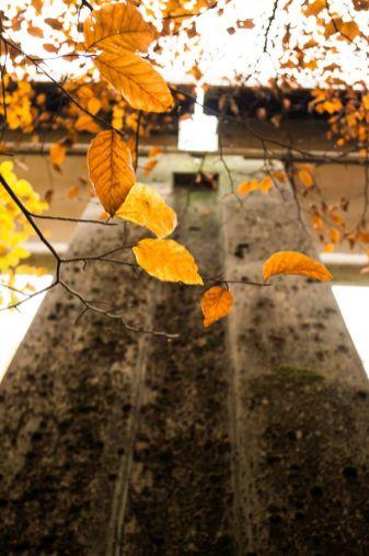Herfst in...._01