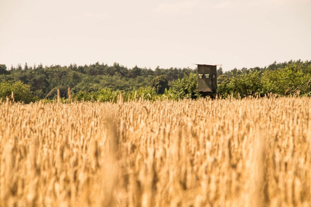 Jagershut boven graanveld