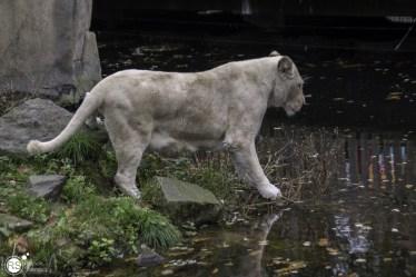 RST_Ouwehands dierenpark Rhenen-oktober 31, 2017-10