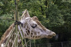 RST_Ouwehands dierenpark Rhenen-oktober 31, 2017-2
