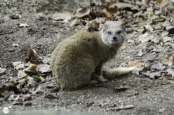 RST_Ouwehands dierenpark Rhenen-oktober 31, 2017-6