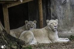 RST_Ouwehands dierenpark Rhenen-oktober 31, 2017-8