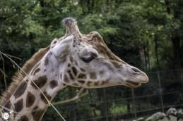 RST_Ouwehands dierenpark Rhenen-oktober 31, 2017-4