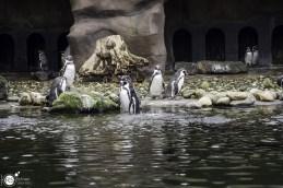 RST_Ouwehands dierenpark Rhenen-oktober 31, 2017-40