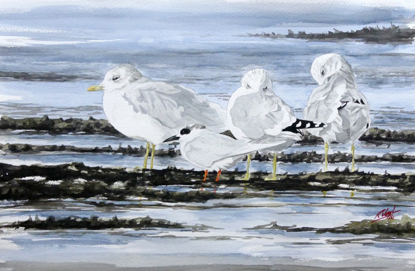 Forster's Tern and Common Gull