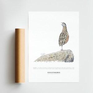 Signed Print Corncrake