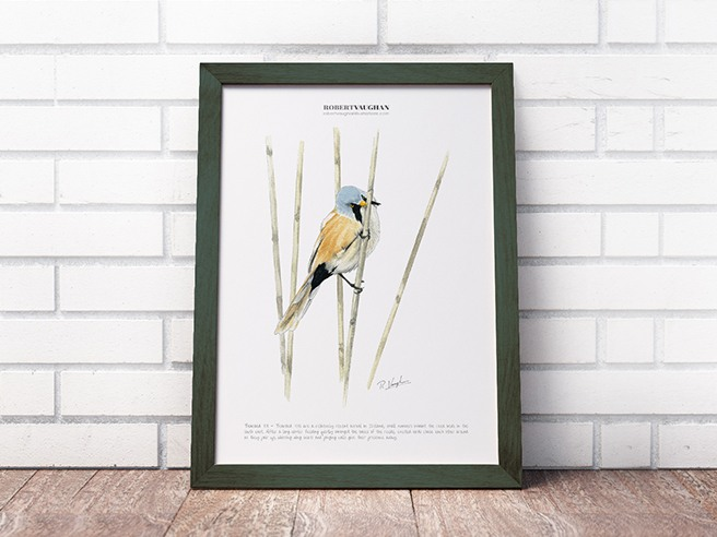 Signed Print Bearded Tit