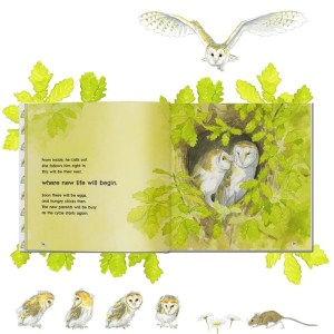 Golden Wings - Barn Owl Book