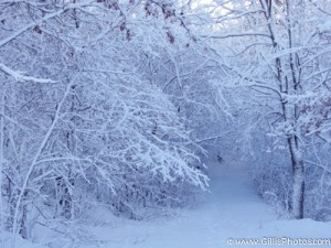 Winter - Sharon Train Station Woods