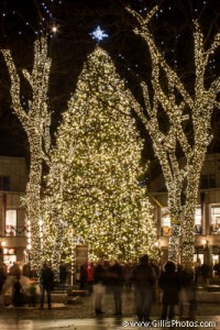 Quincy Market Christmas Tree