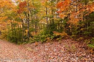 Bartlett---Bear-Notch-Road-Fall-Foliage
