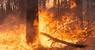 Sarno, un denunciato per incendio boschivo colposo