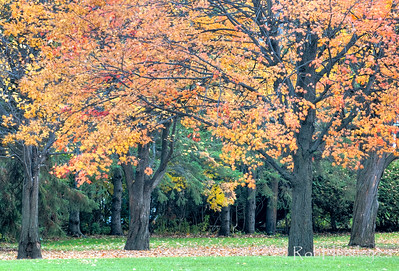 Autumn colour in Westwood Park, Ottawa.