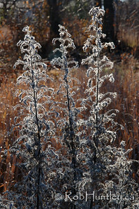 Backlit wild flowers.