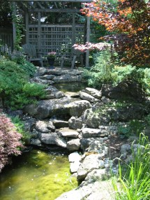 Ponds And Waterfalls Robin Aggus - Natural Landscaping