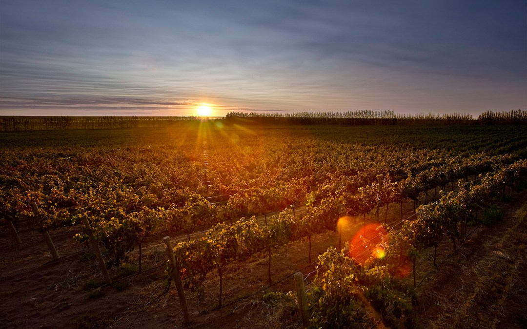 Dégustation de vins, domaine Argentin «Familia Schroeder»,