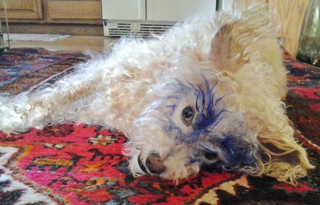 Winston the Wonder Dog