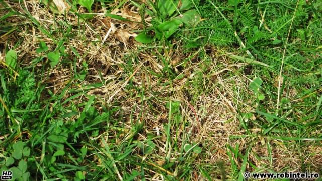 Autostrada furnicilor, o fâșie de pământ pe care mergeau multe, multe furnici