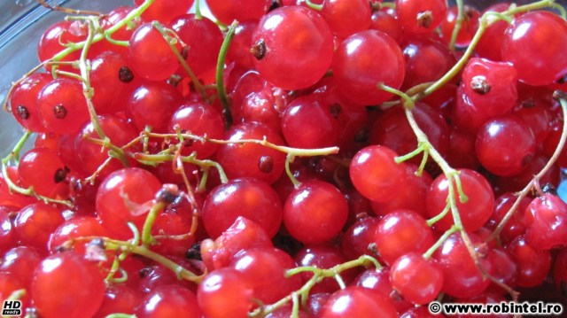 Strugurei (coacăze roșii)