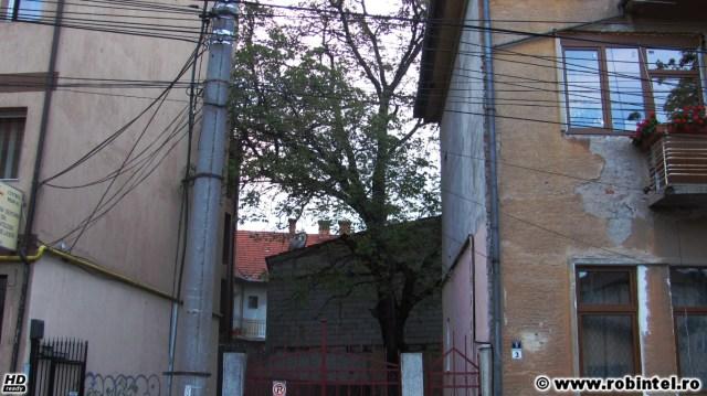 Copac înconjurat de clădiri pe toate laturile, ca sub asediu