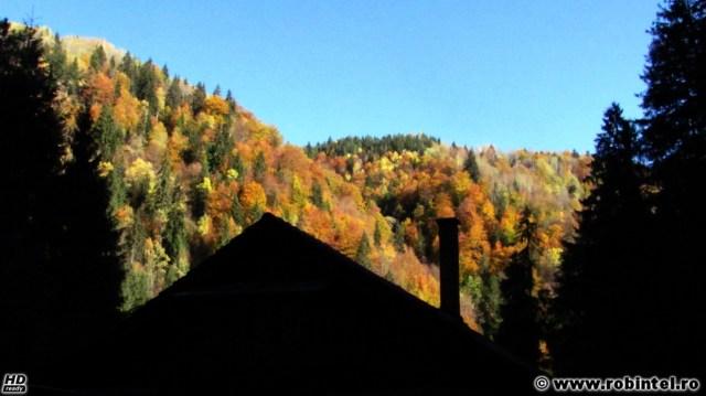 Pădure tomnatică în Măguri - Răcătău - Soarele bătea primprejurul cabanei într-un mod foarte frumos, dar pe cabană nu bătea