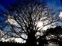 Copac fără frunze (http://www.robintel.ro/plante-si-cer/)