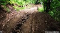 Un drum forestier, prin pădure, spre Aușelu - Iezeru