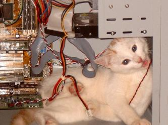 Cat attacking computer! Oh No!