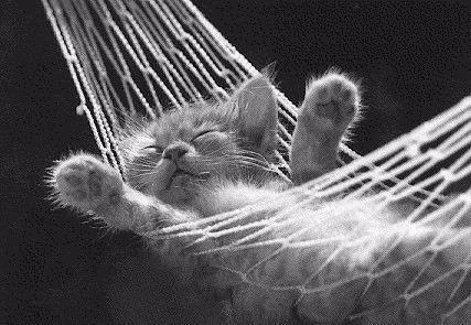 hammock cat