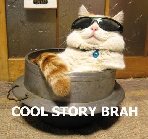 chill cat