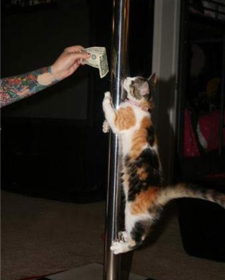 strip club cat