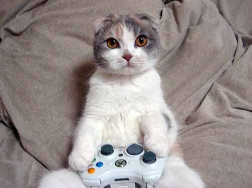 cat-video-games