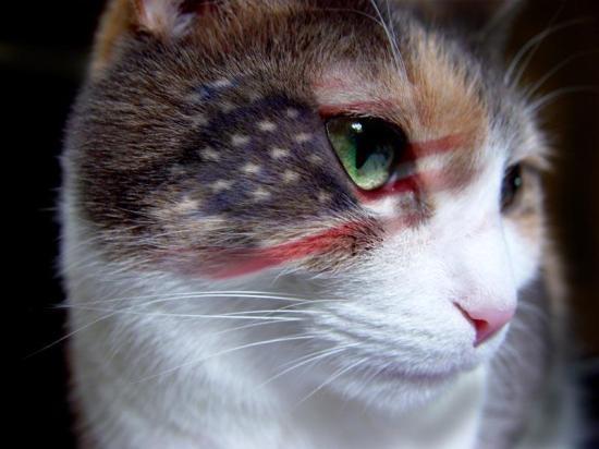 flag_cat